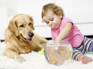 Chem-Dry carpet cleaning is safe for your loved ones