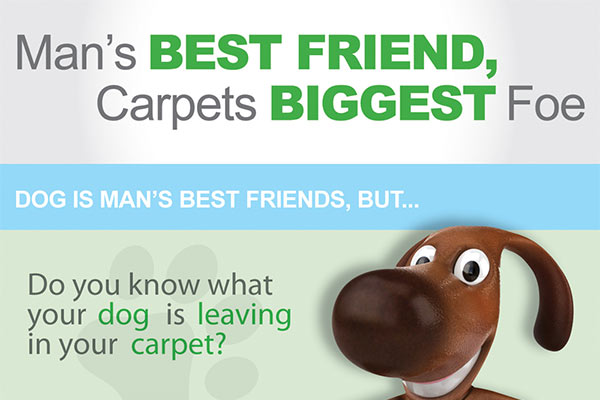 chem-dry-cleans-dog-mess-from-carpets-feat
