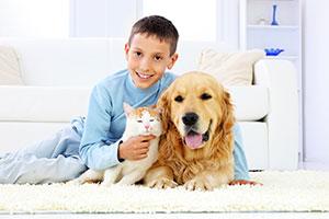 chem-dry-pet-urine-odour-removal